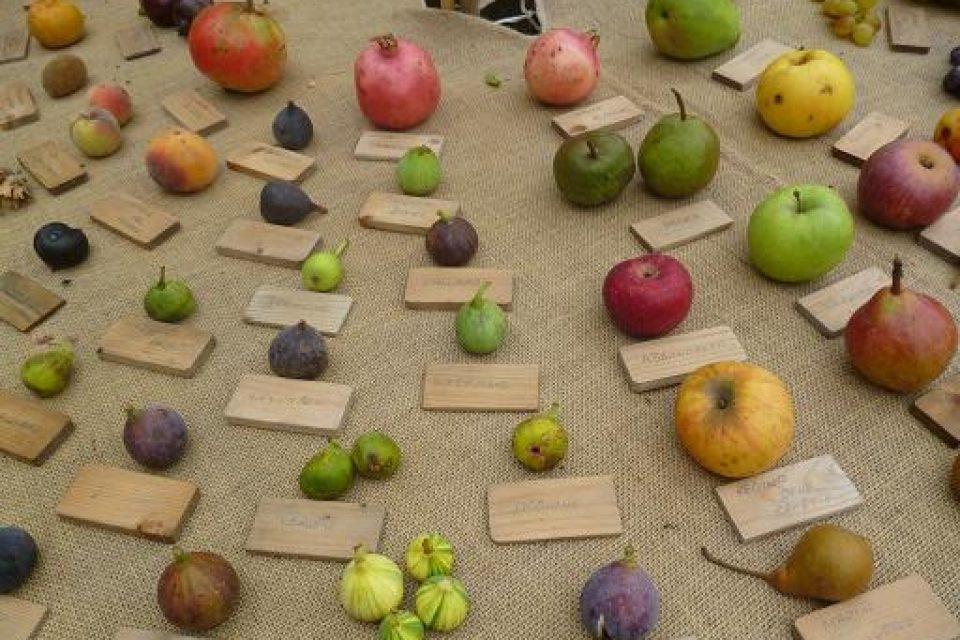 I frutti antichi, figli legittimi della biodiversità