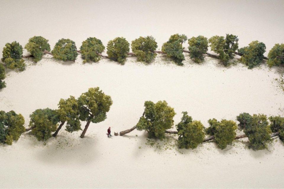 Fa più rumore un albero che cade o una foresta che cresce?