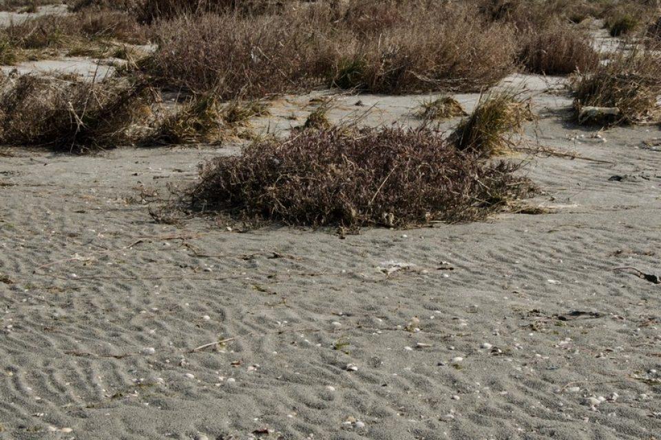 La Boschettona, dove la terra non è già più terra e il mare non è ancora mare