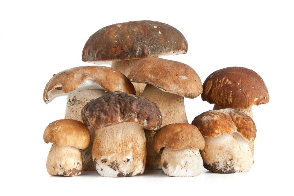I funghi, preziosi alleati per la salute umana