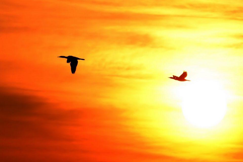 Gli uccelli, indicatori del clima che cambia