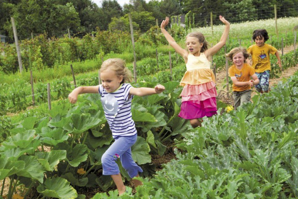 Fattorie didattiche: l'estate sicura e piena di divertimenti