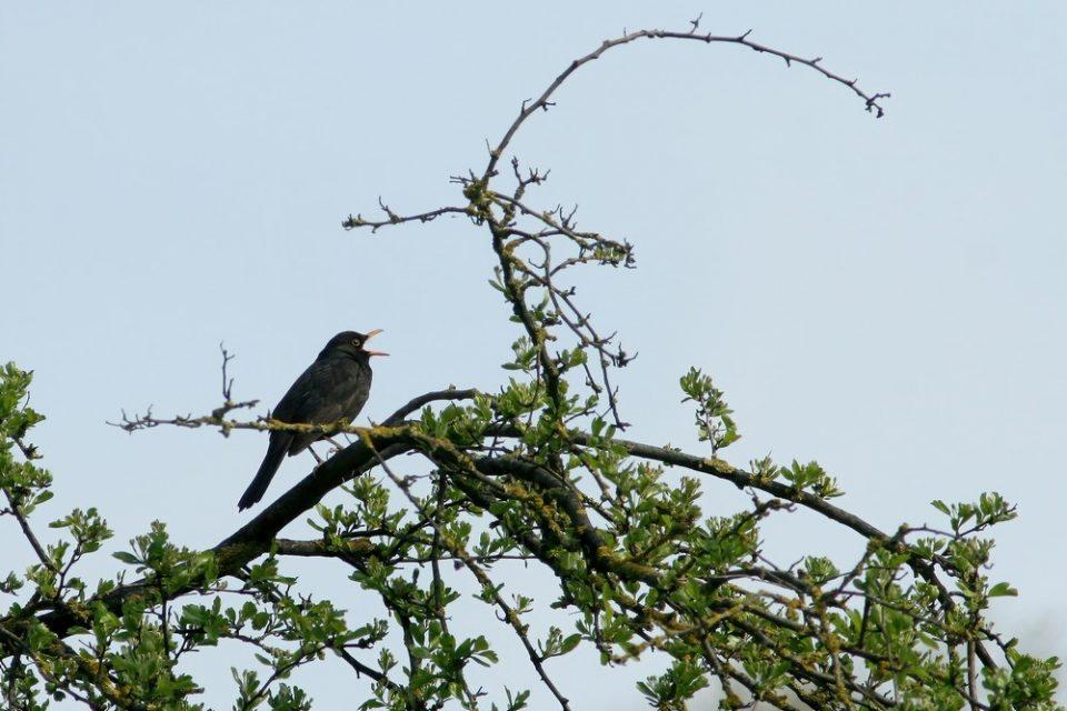 Il canto degli uccelli, poesia per l'anima