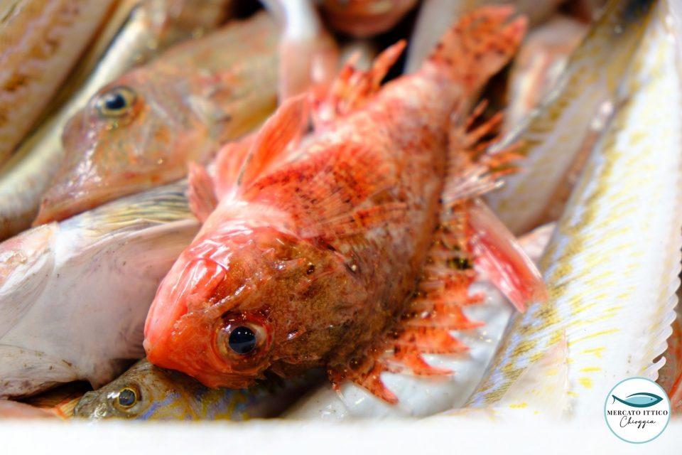 Mercato Ittico all'ingrosso di Chioggia, La capacità di guardare al futuro per dare concretezza al domani della pesca