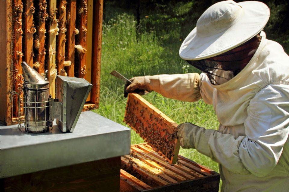 Gardin, il miele che nasce da un sincero rapporto di lavoro con le api